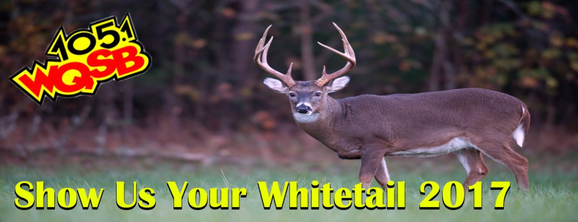 WQSB - Show Us Your Whitetail 2017-2018